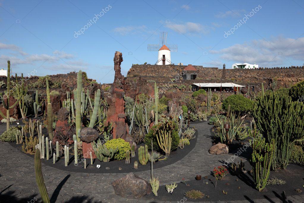 Cactus garden jardin de cactus on canary island - Jardin de cactus ...