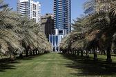 Palm Trees Park in Sharjah City, United Arab Emirates — Stock Photo
