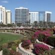 Stock Photo: Flowerbeds in city of Dubai