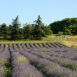 Lavender field and camping sign in France - ストック写真