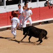 Chasing the bulls in the Roman Arena at Arles — Stock Photo