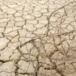 Cracked, parched soil after a drought — Stock Photo