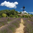 Lavender fields in Provence, France — Stock Photo