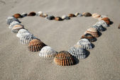 Heart made of shells in the sand — Stock Photo