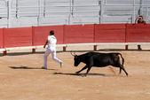 Perseguindo os touros na arena romana em arles, frança — Foto Stock