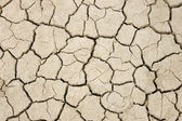Cracked, parched land after a drought — Stock Photo