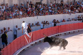 Bullfight in the old roman Arena in Arles, France — Stock Photo