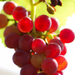Bunch of Grapes — Stock Photo #9874310
