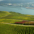 Stock Photo: Landscape on Rhine River, Germany