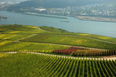 Landscape on the Rhine River, Germany — Stock Photo