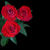 Beautiful red roses isolated on black background — Stock Photo