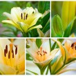 Yellow lily in summer day collage - Stock Photo