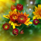 Bright yellow and red flowers in summer season — Stock Photo
