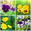 Beautiful spring colorful flowers background. Collage — Stock Photo #8958922
