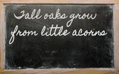 Expression - Tall oaks grow from little acorns - written on a s — Stockfoto