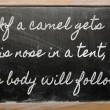 Expression - If a camel gets his nose in a tent, his body will f — Stok fotoğraf