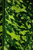 Tropiska löv — Stockfoto