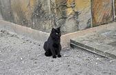 Gato negro — Foto de Stock