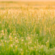 Grass with drops of dew — Stock Photo #10334238