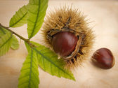 Chestnut — Stockfoto