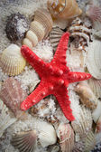 Seashells and starfish — Stock Photo