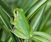 Little green frog — Stock Photo