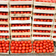 Stock Photo: Fresh organic tomato is ready for transport