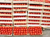 Fresh organic tomato is ready for transport — Stock Photo