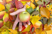 Apple in hand on backround of leaves — Foto Stock