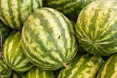 Watermelons and wasps — Stock Photo