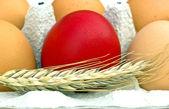 Red Easter Egg — Stock Photo