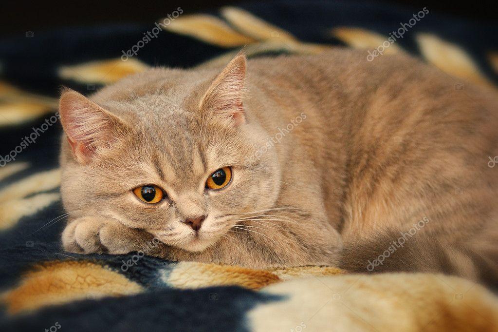 free cat adoption near me