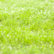 Drops of dew on green grass — Stock Photo