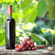Wine bottle and bunch of grapes - Stock Photo