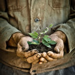 Man hands holding a green young plant — Stock Photo #8485528