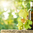 White wine bottle, vine, glass and bunch of grapes — Stock Photo