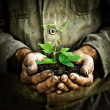 Man hands holding a green young plant — Stock fotografie