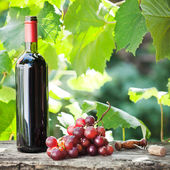 Wine bottle and bunch of grapes — Stock Photo
