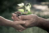 Hands of elderly man and baby holding a plant — Stock Photo