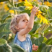 Beautiful child with sunflower — Stock Photo