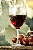 Red wine glass and bunch of grapes — Stock Photo