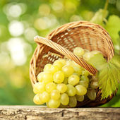 Bunch of graped and vine leaf in basket — ストック写真