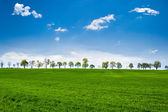Green fields with trees — Stock Photo