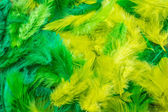 Feathers — Stock Photo