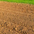 Furrows in spring — Stock Photo