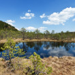 The Mohos peat bog - Stock Photo
