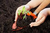 Manos del niño proteger las plántulas — Foto de Stock