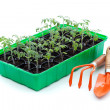 Seedlings and gardening utensils — Stock Photo #10560142