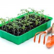 Seedlings and gardening utensils — Stock Photo