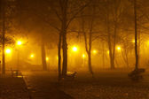 Fog in the park — Stock Photo
